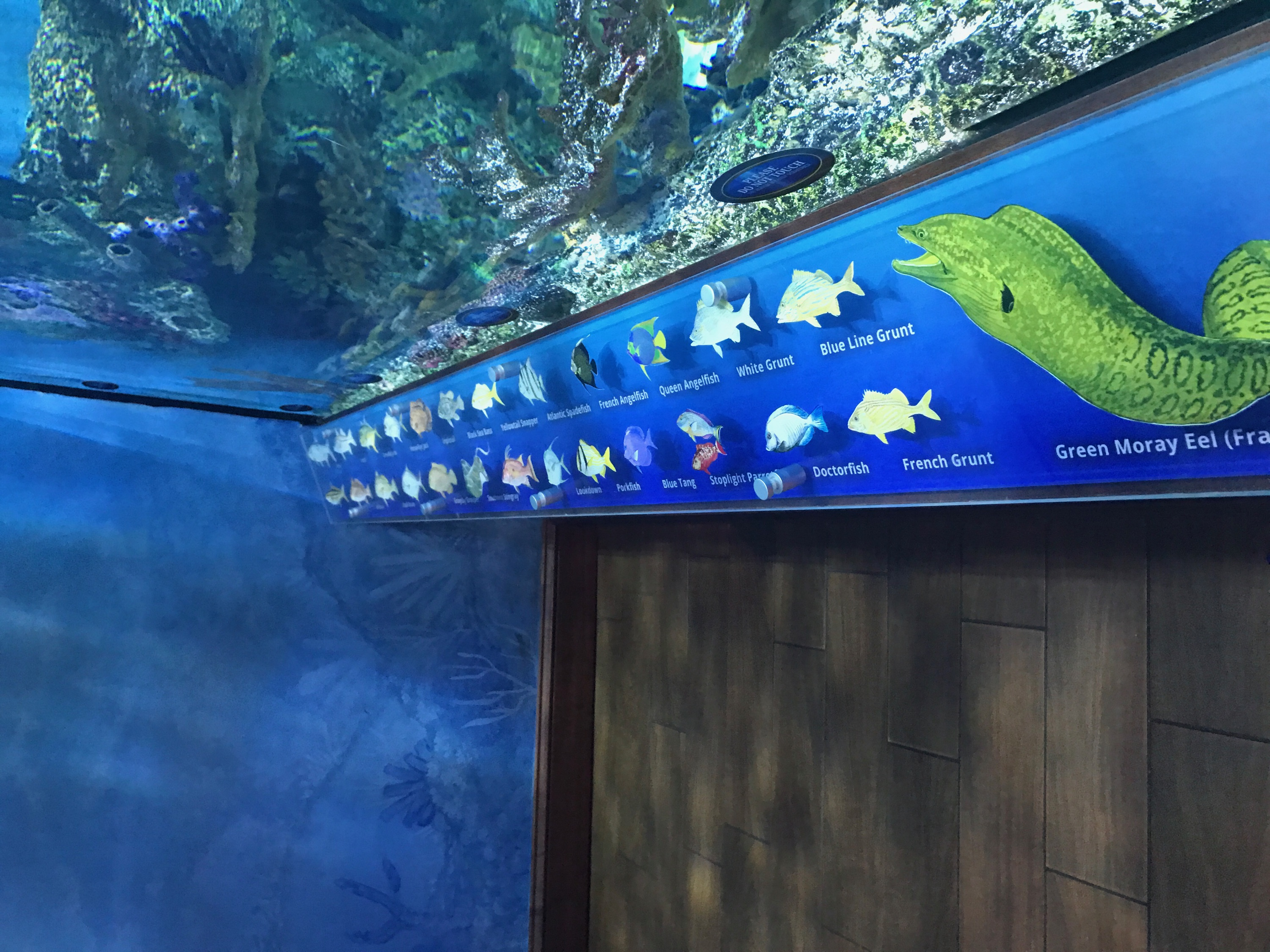 Photo of the custom graphic showing all of the fish in the aquarium.