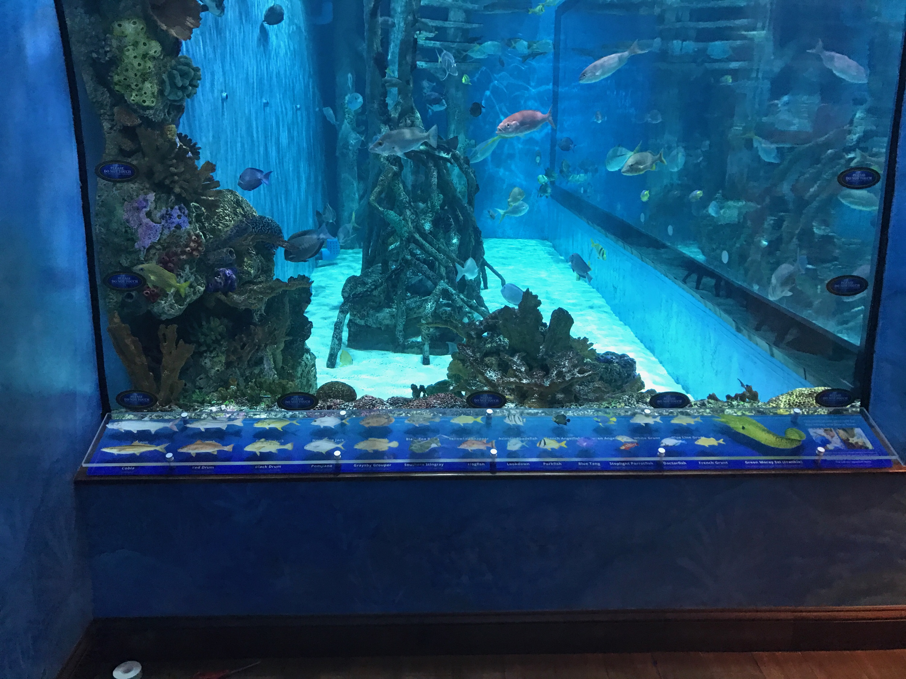 This is a view of the aquarium from the front angle.